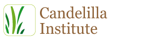 Candelilla Institute